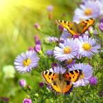 ФОТОобои 196*201см Бабочки 6л