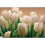 ФОТОобои 294*201см Белые тюльпаны 9л