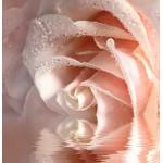 ФОТОобои 196*201см Кремовая роза 6л