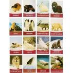 Обучающие карточки Животные Севера 16шт. 1262695