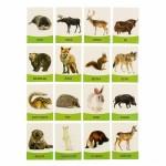 Обучающие карточки Дикие животные 16шт. 1262694