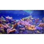 Мозаика Коралловый риф 3D1002*602 Панель ПВХ