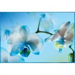 ФОТОобои 134*196см Голубая орхидея 4л Тула